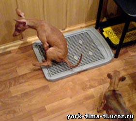 Почему собака писает на подстилку